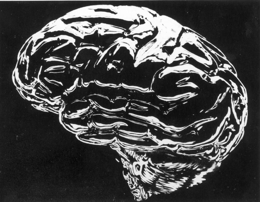 HJERNEN: Det sies at hjernen er den mest erogene sonen. Den er i alle tilfelle svært delaktig når det gjelder orgasme.