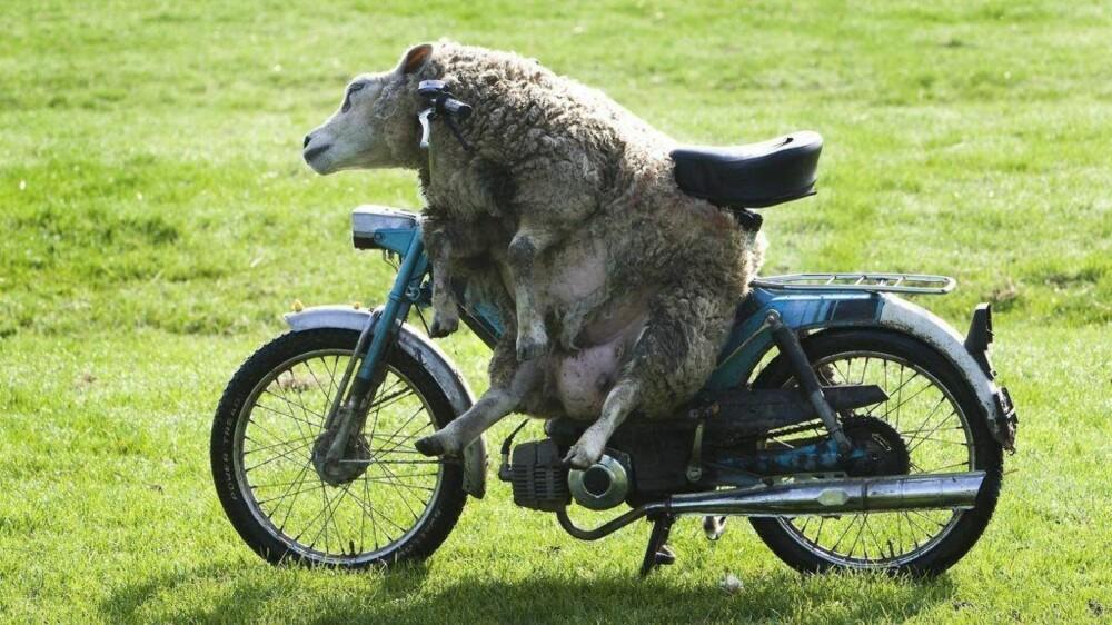 f4f54db4 VROM: Gutta brukte - og bruker? - gjerne pengene på moped.