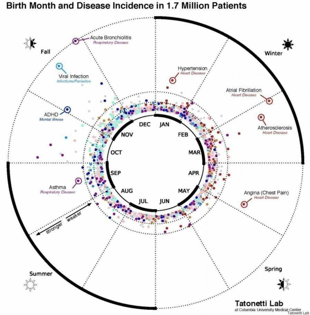 Forskerne ved Columbia har laget dette hjulet for å vise hvordan enkelte sykdommer hopet seg opp enkelte måneder.