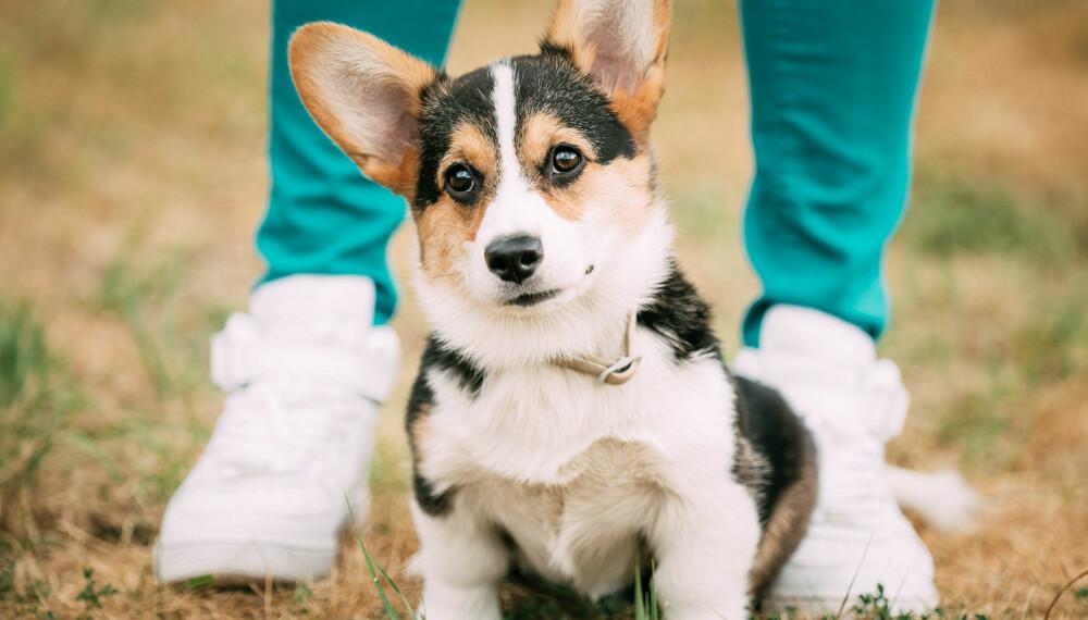 Zak forteller at nivået av oksytocin nok vil avhenge av hvilken person i familien hunden samhandler med - den har mest sannsynlig en favoritt eller to.