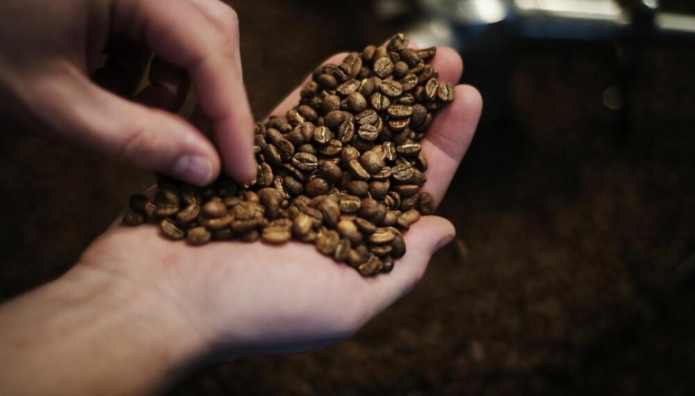 KAFFEBØNNE: Kaffeplantene kan bli skadelidende i varmere temperaturer.