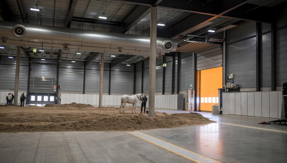 Under Norwegian Horse Show kommer det til å være 550 hester i Norges Varehus i Lillestrøm.