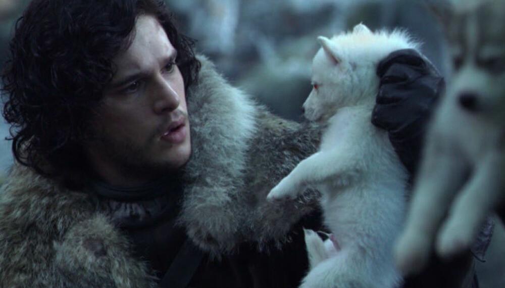KOMMER TILBAKE: Vi har ikke sett noe til Jon Snows kjæledegge Ghost i det siste. Det skal det ifølge spesialeffektsjefen bli forandring på i siste sesong.
