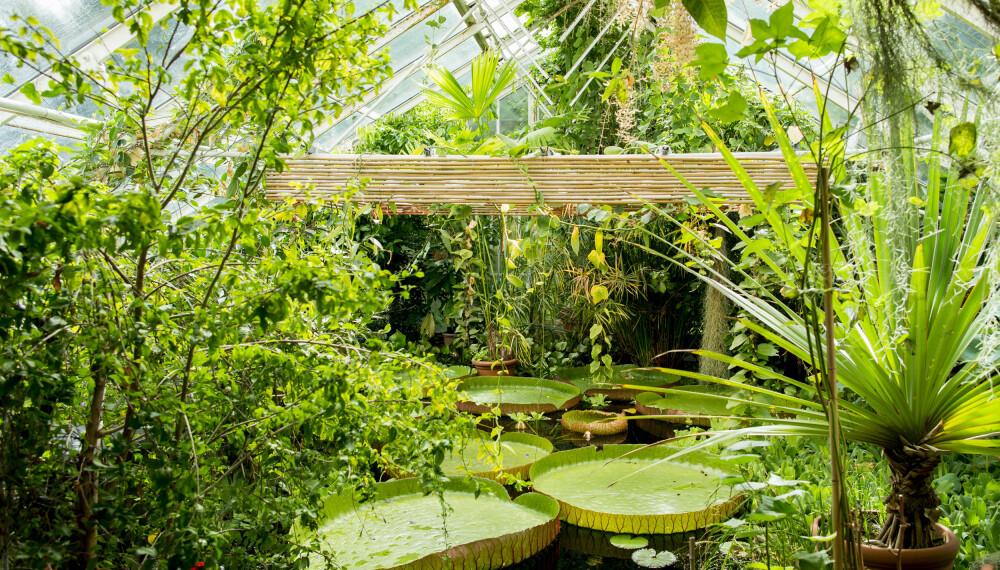 BOTANISK HAGE: På Botanisk hage i Oslo kan du se planter og vekster fra hele verden. Men stedet har mye mer å by på enn kunn grønn skjønnhet.