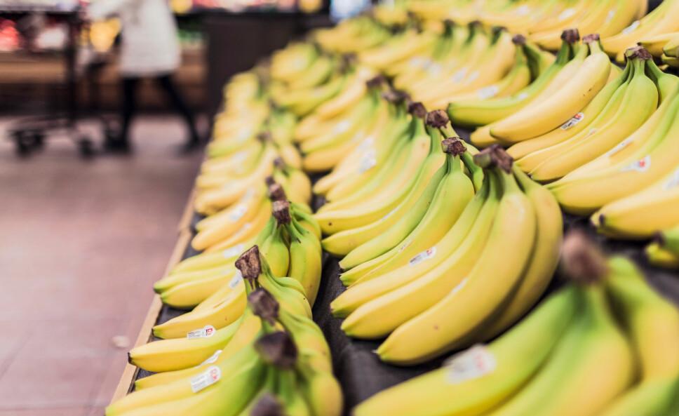 POPULÆRT: Banan er populært som mellommåltid her i Norge. Men hva inneholder den egentlig, og hva er de største mytene om bananen?