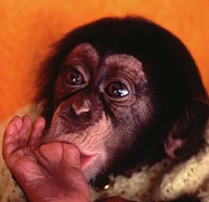 FORLATT: Lille Julius ble avvist av sin mor, Sanna i 1979. Det ble starten på en utrolig historie.